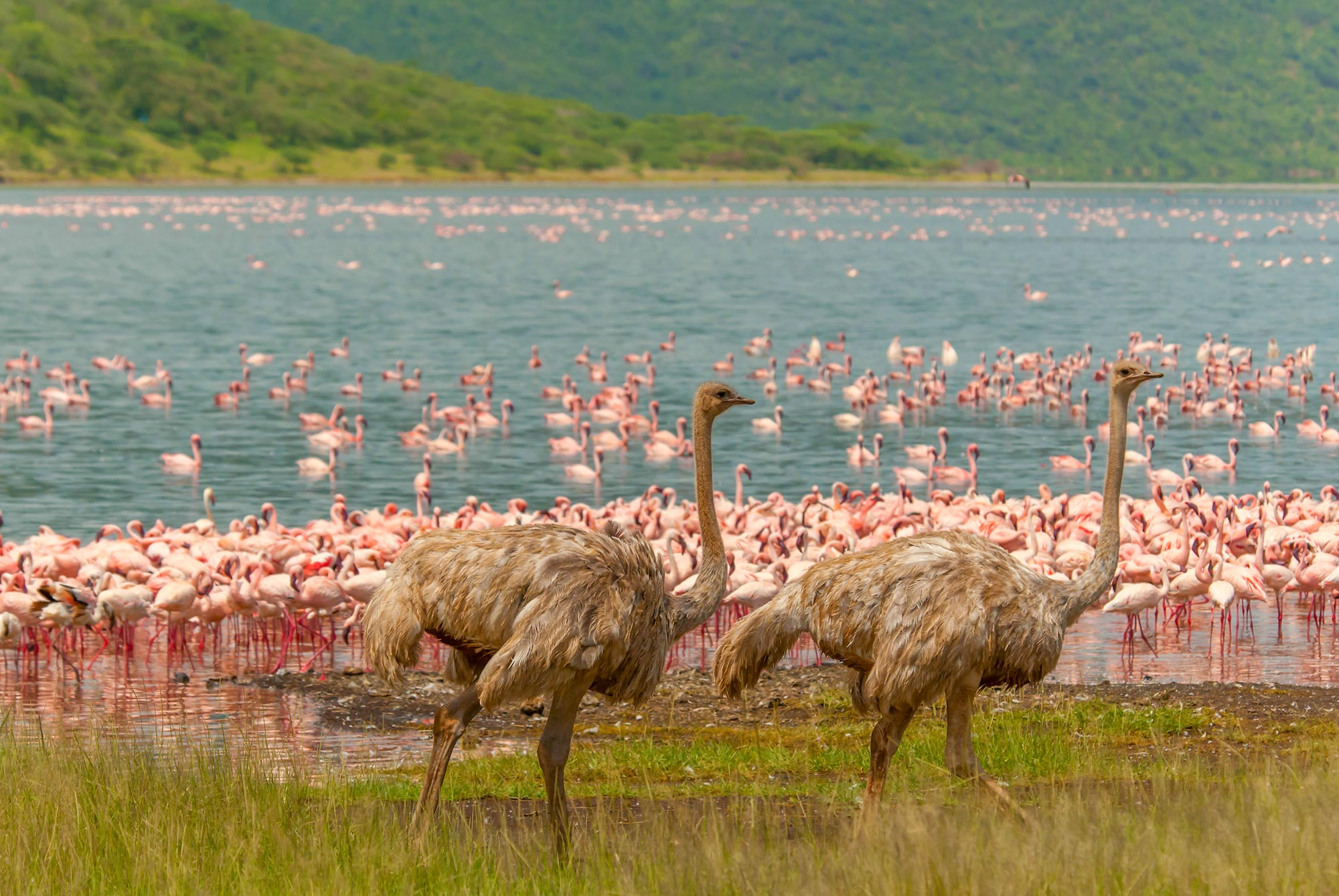 Flamingos am Lake Bogoria