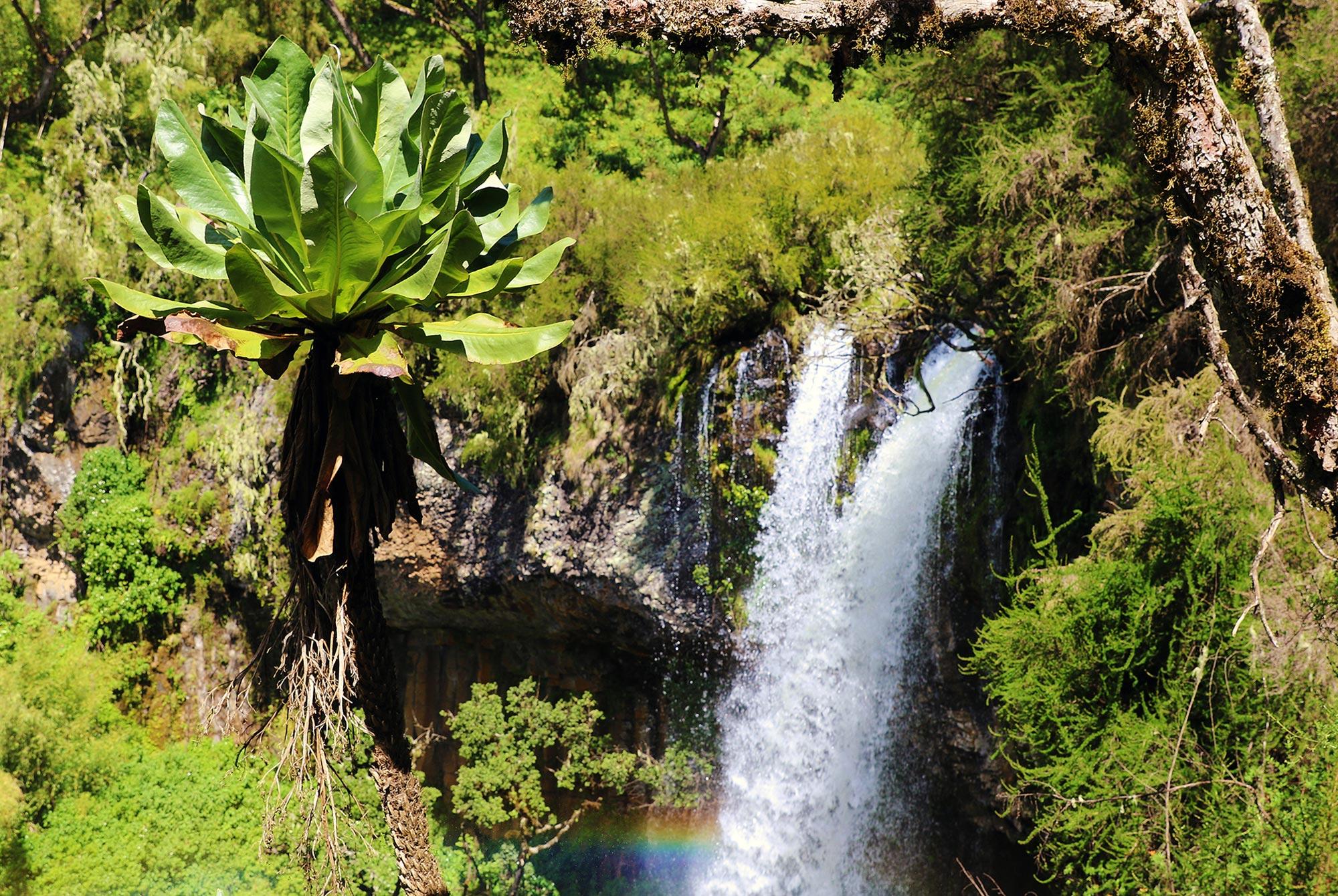 Wasserfall im Aberdare Nationalpark